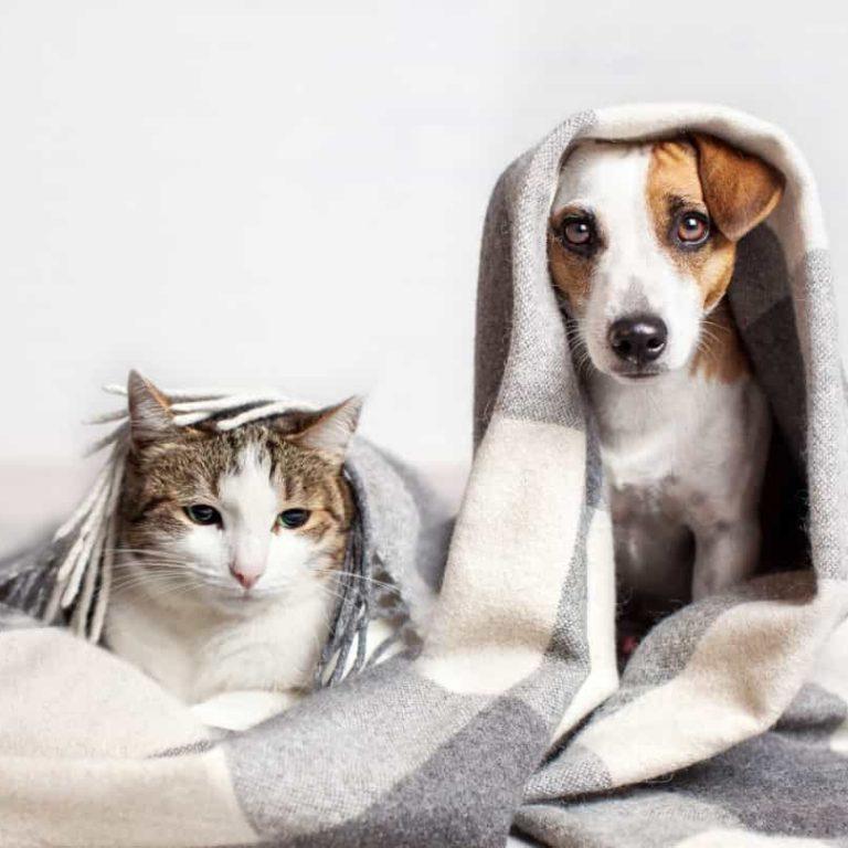 Aseo Mascotas